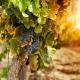 Viaje por las Rutas del Vino del Mediterráneo (corto 5D4N)
