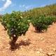 Viaje por las Rutas del Vino del Mediterráneo (extenso 7D6N)